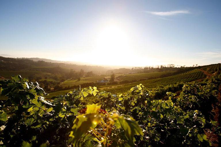 Wine Tasting in SA